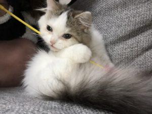 猫じゃらし大好き!